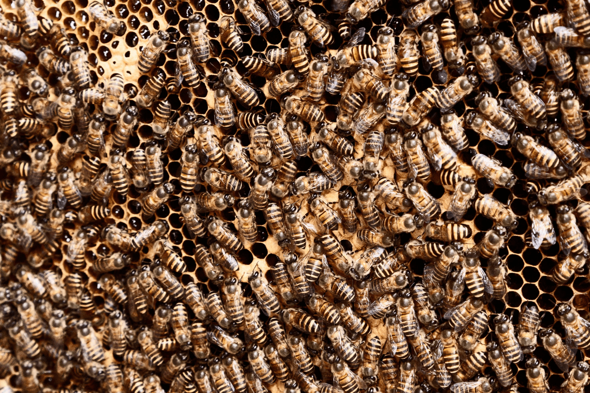insect collapse