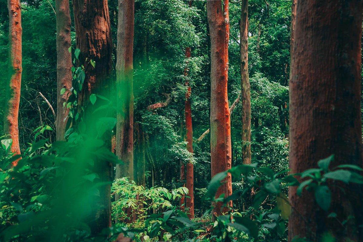 جنگل بارانی آمازون