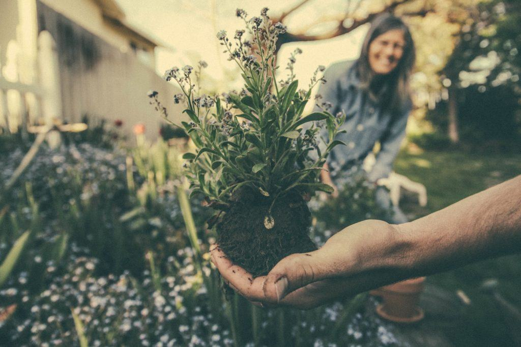 How To Start A Community Garden Ethical Net